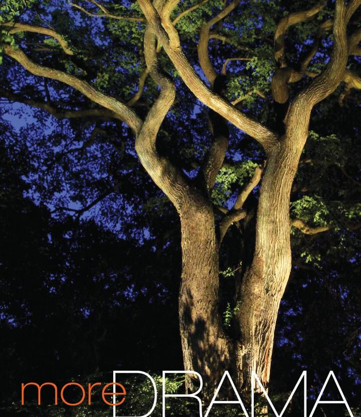 Landscape Details - More Drama