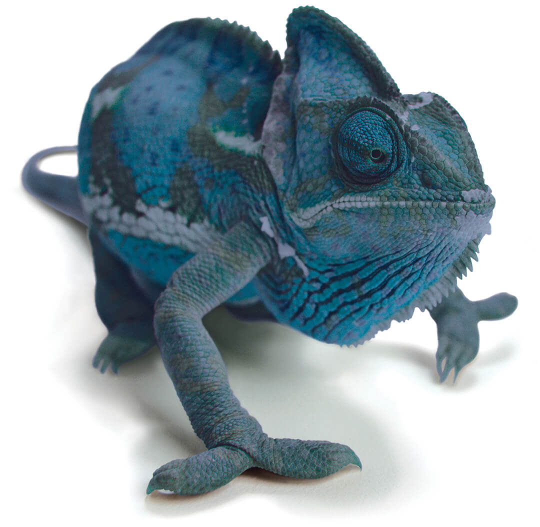 Business Wire chameleon ad